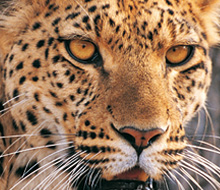 Djur från hela världen